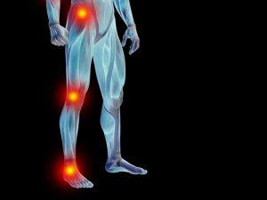 ossa muscoli