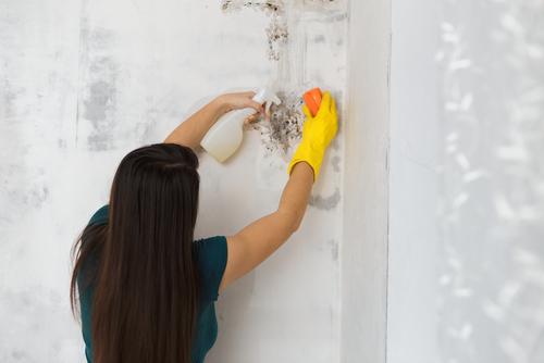 Umidit e muffa in casa e rischio asma allergie sinusiti e bronchiti popular science - Umidita e muffa in casa ...